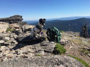 Bella taking a break on the trail